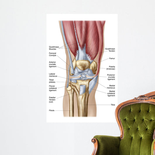 Anatomy Human Knee Joint Wall Mural