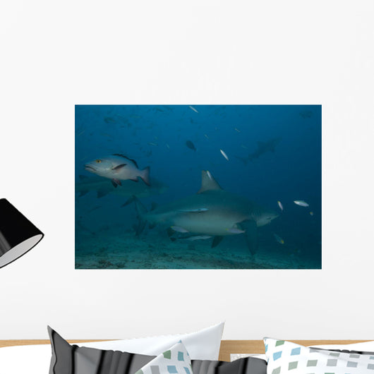 Large Bull Shark Bistro Murky Close Wall Decal