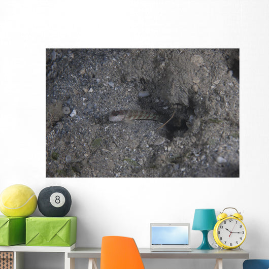 Shrimp Goby Stands Guard Wall Decal