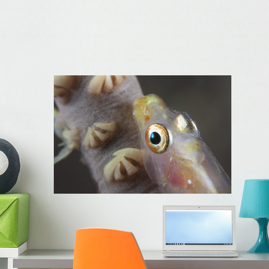 Close-up Whip Coral Goby Top Wall Decal