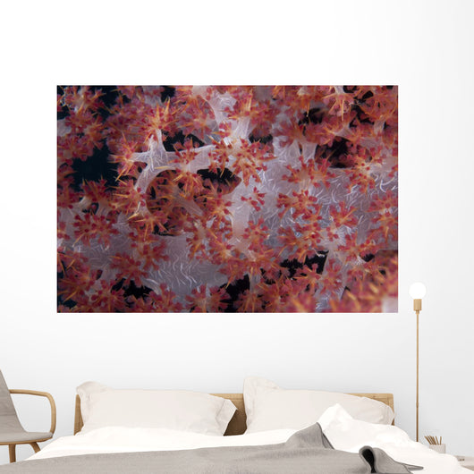 Red Tree Coral Fijian Angled Wall Decal