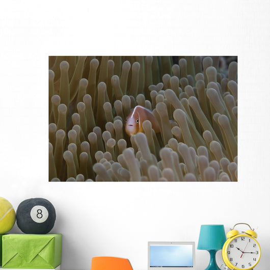 Pink Anemonefish Its Host Distant Wall Decal