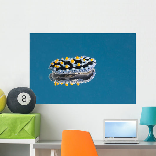 Phyllidia Coelestis Nudibranch Blue Light Wall Decal