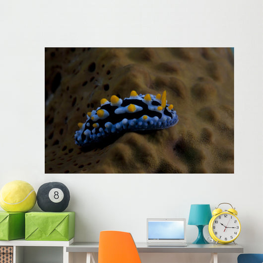 Phyllidia Coelestis Nudibranch Beqa Wall Decal