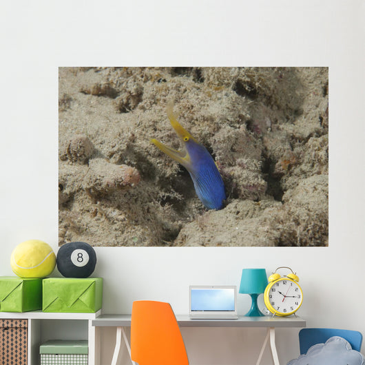 Blue Ribbon Eel Left Wall Decal