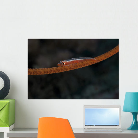 Whip Coral Goby Fiji Red Wall Decal