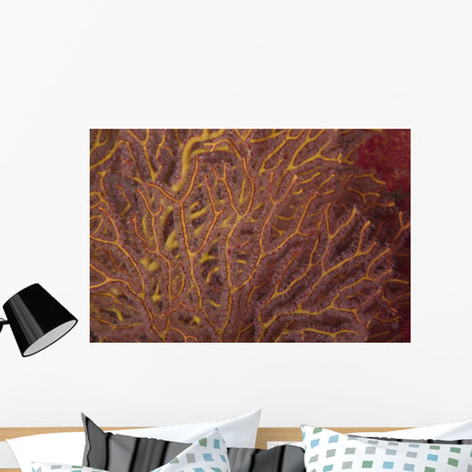 Soft Coral Polyps Feeding Wall Decal