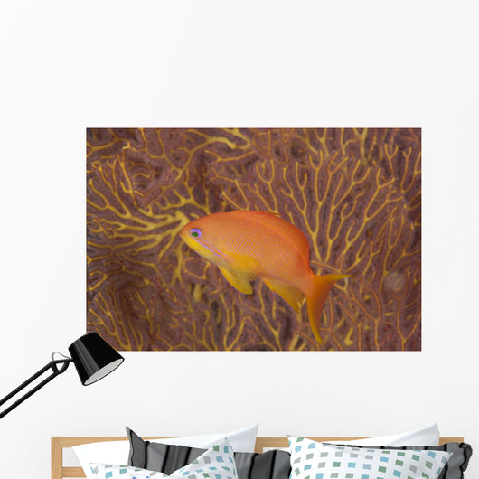 Scalefin Anthias Fish Beqa Coral Wall Decal