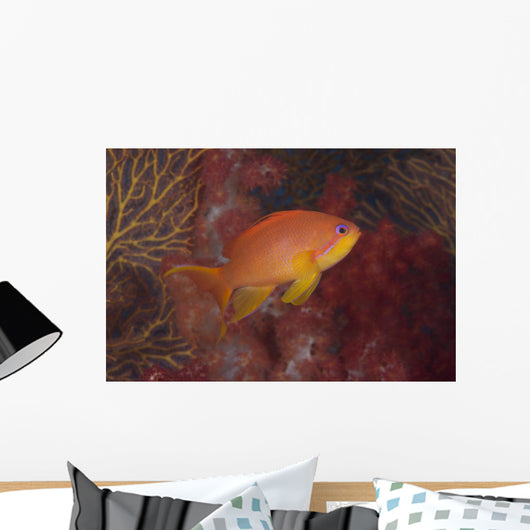 Scalefin Anthias Fish Beqa Right Wall Decal