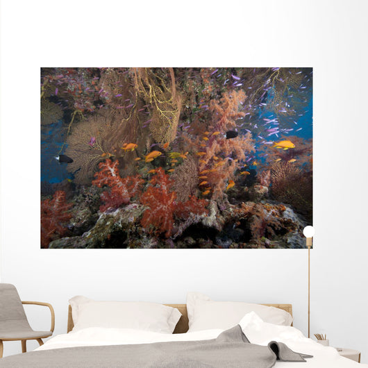 Schooling Scalefin Anthias Fish Wide Shot Wall Decal