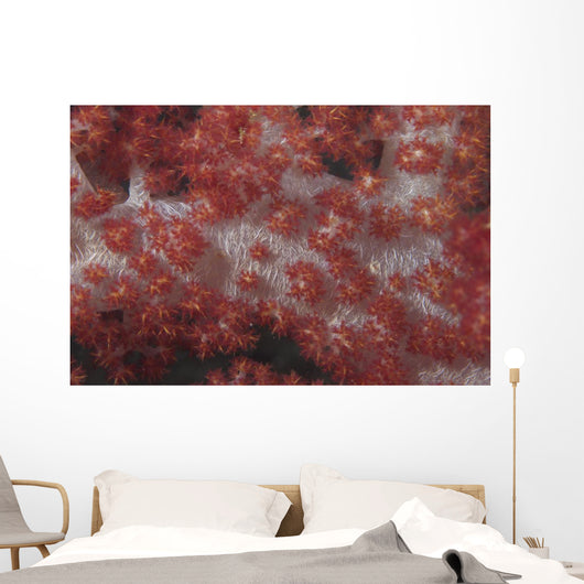 Red Tree Coral Fijian Covered Wall Decal