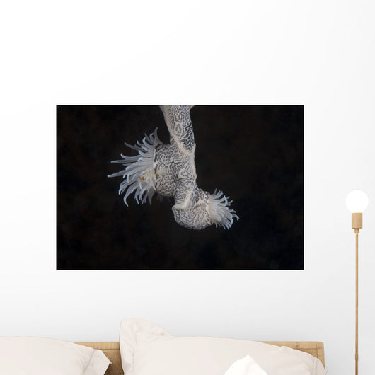 Cup Coral Polyps Hang Dangling Wall Decal