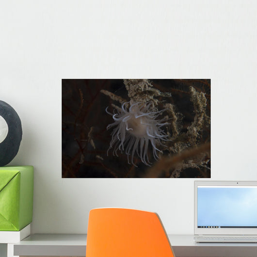 Cup Coral Polyps Hang Swaying Wall Decal