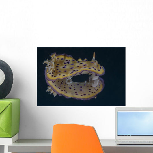 Chromodoris Kuniei Nudibranch Beqa Pale Wall Decal