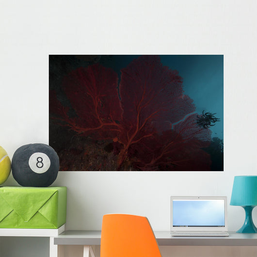 Large Red Gorgonian Sea Close-up Wall Decal
