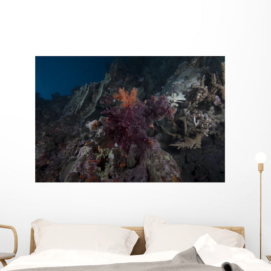 Soft Coral Healthy Fijian Wall Decal