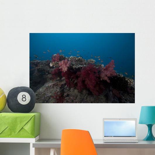 Soft Coral Fijian Reef Wall Decal