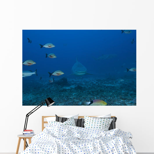 Large Bull Shark Bistro Distant Head Wall Decal