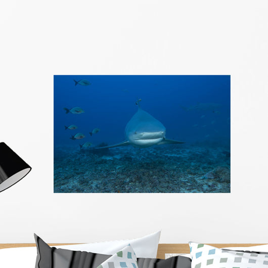 Large Bull Shark Bistro Head Wall Decal