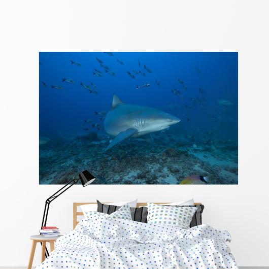 Large Bull Shark Bistro Front Right Wall Decal