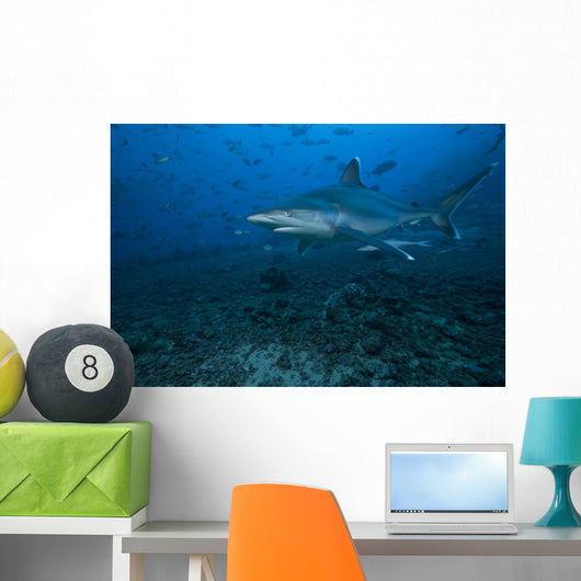 Silvertip Shark Bistro Dive Wall Decal