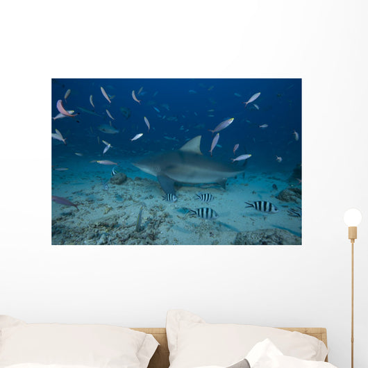 Large Bull Shark Bistro Turning Away Wall Decal