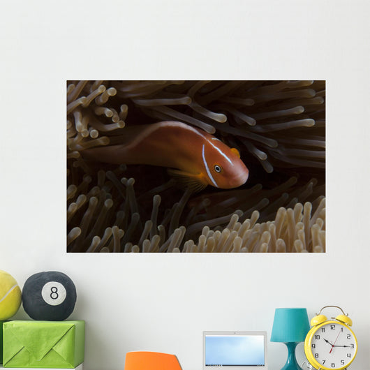 Pink Anemonefish Its Host Anemone Wall Decal