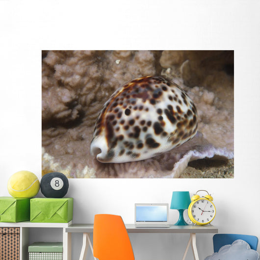 Large Tiger Cowrie Fiji Light Wall Decal