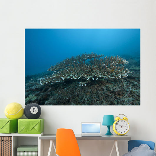 Stony Corals Beqa Lagoon Distant Wall Decal