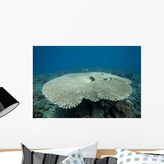 Plate Coral Beqa Lagoon Wall Decal