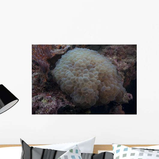 Wandering Sea Anemone Beqa Wall Decal
