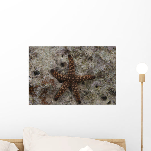 Close-up Sea Star Beqa Wall Decal