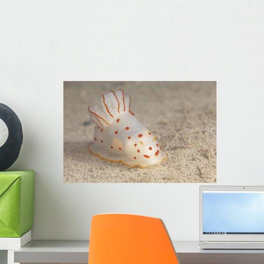 Gymnodoris Ceylonica Nudibranch Beqa Front Wall Decal