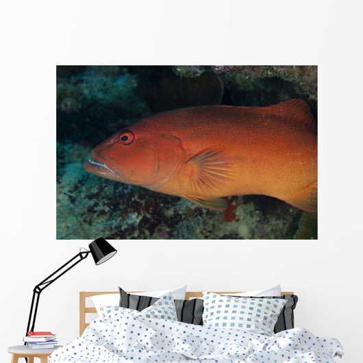 Spotted Grouper Beqa Lagoon Wall Decal