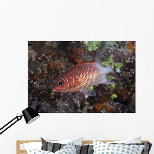 Tailspot Squirrelfish Swimming Fiji Wall Decal