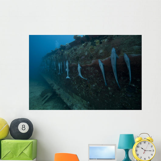 Remora's Suck Hull Shipwreck Wall Decal