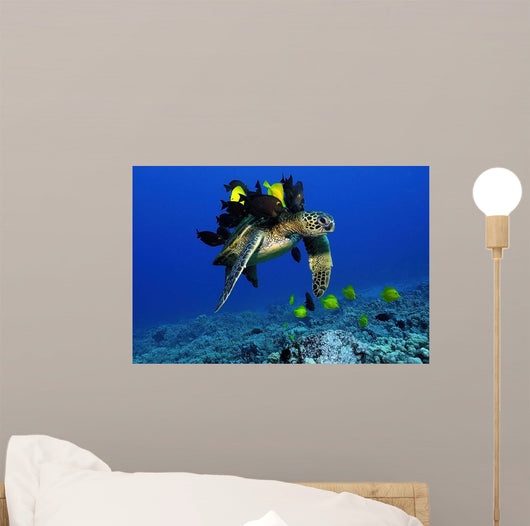 Green Sea Turtle Getting Wall Mural