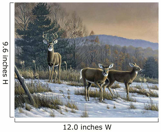 Prime Time - Whitetail Deer Wall Mural