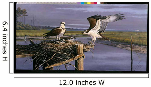 Chesapeake Treasurers - Osprey Wall Mural
