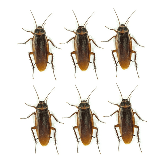 Cockroach Funny Sticker Set | Roach Gag Stickers