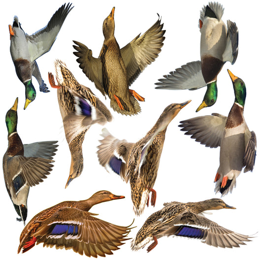 Mallards Wall Decal