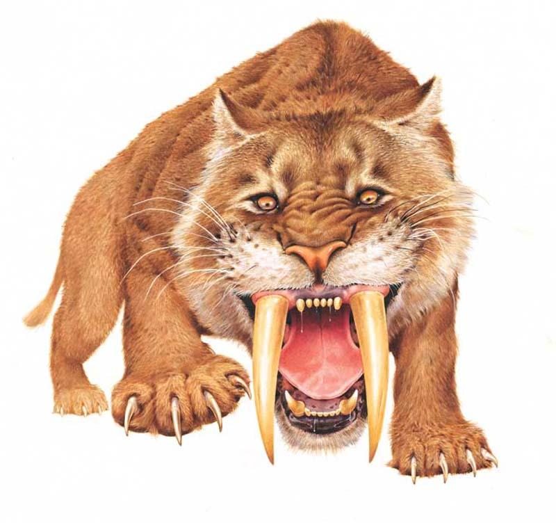 Smilodon Growling Wall Decal  sc 1 st  WallMonkeys Wall Decals : wallmonkeys wall decals - www.pureclipart.com