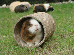 Become a Guinea Pig Boutique Supplier with Handmade items
