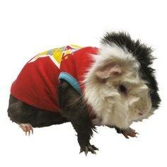 Best Buddy Small Pet Costume with a Star - the-cavy-closet