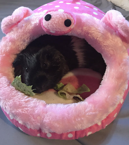 Pig Life - Cozy Snuggles Lounger - the-cavy-closet