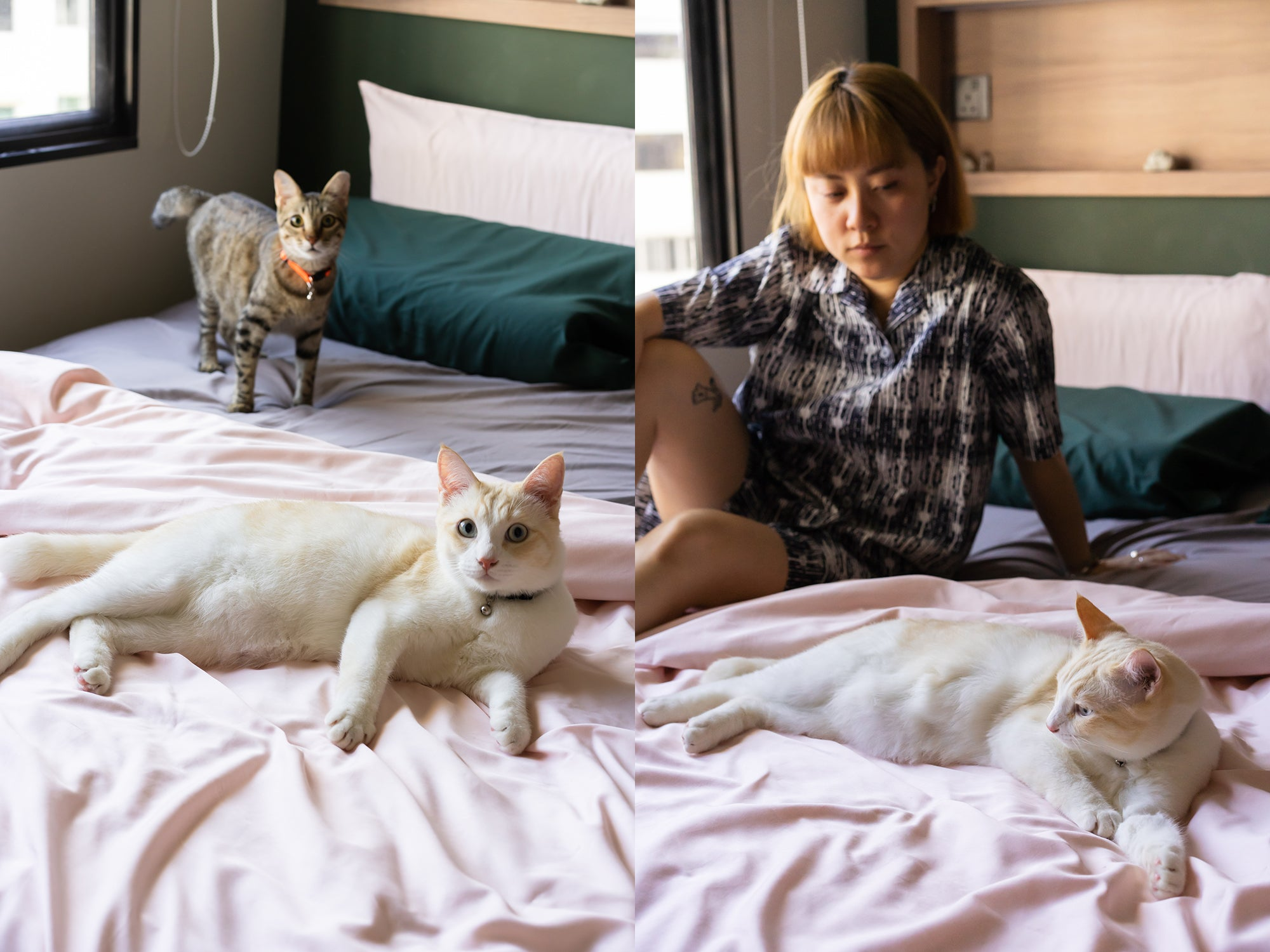 cute cats chilling on pink bedsheets