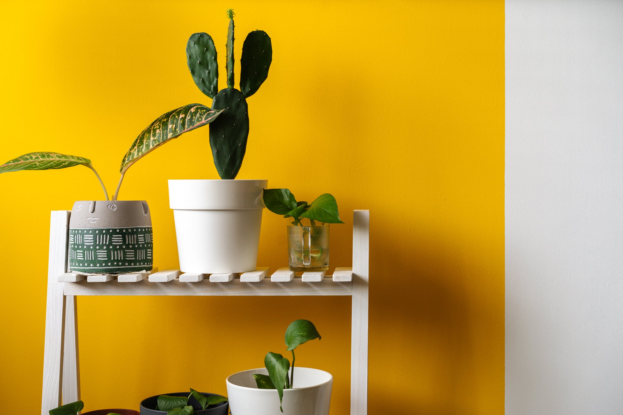 house plants against yellow wall