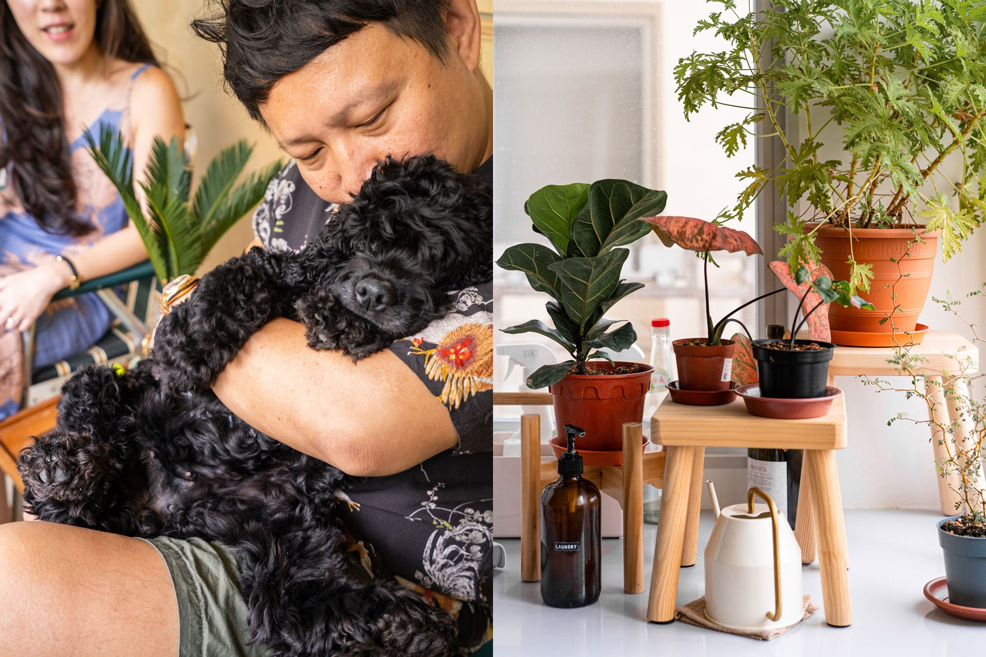 house plants in modern home with black cockel spaniel