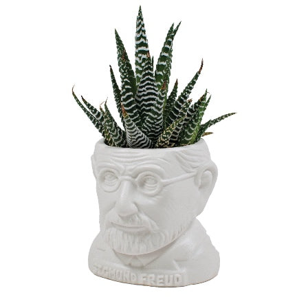 Sigmond Freud planter