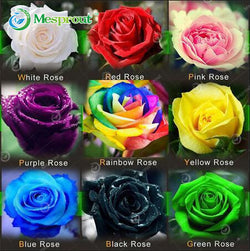 Rainbow Rose Seeds -100PCS